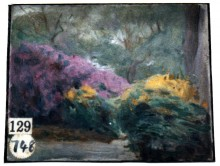 Landscape: Purple and Yellow Rhododendrons 9269